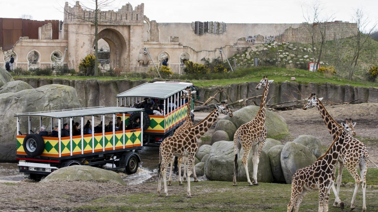 2004-giraf